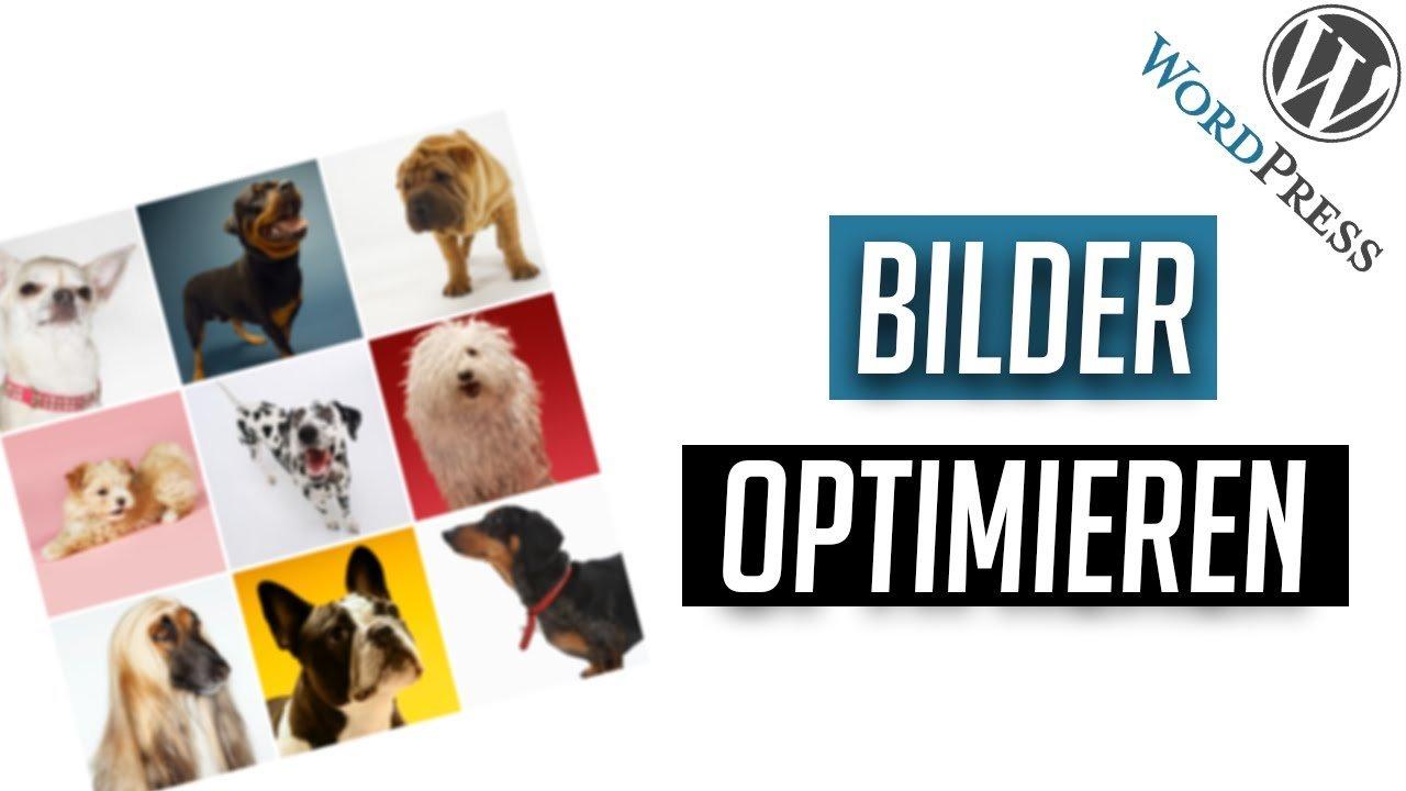 Bilder optimal für das Web vorbereiten - WordPress